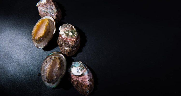 Photo of frozen abalone