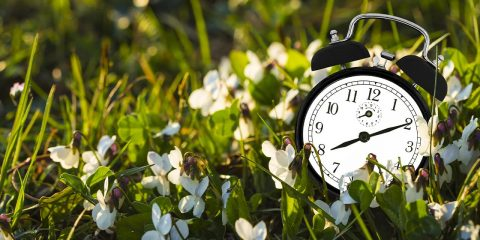 Photo of a clock in the grass
