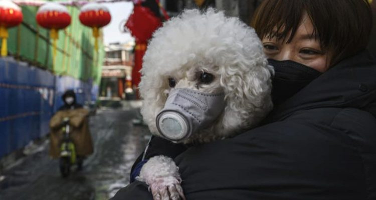 Photo of a dog wearing a protective mask