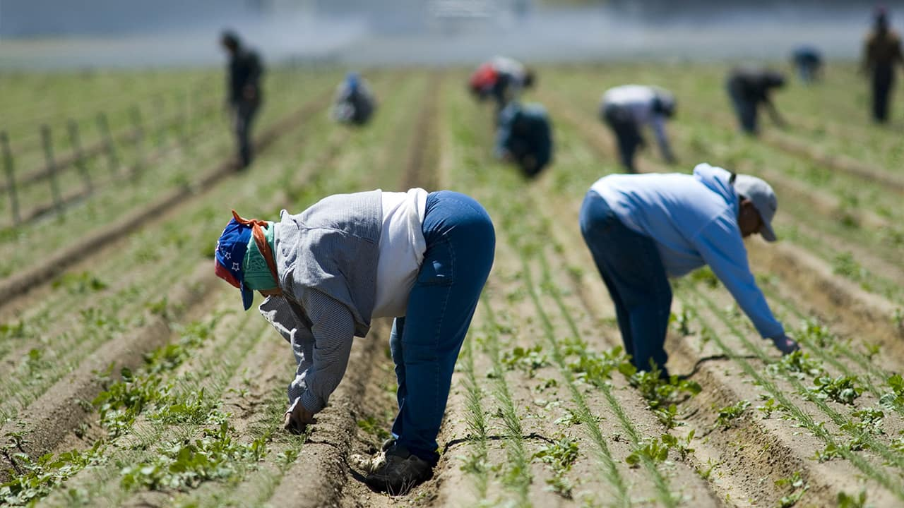Photo of field workers in San Joaquin, Calif.