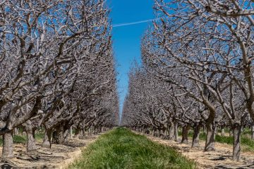 Photo of orchard trees
