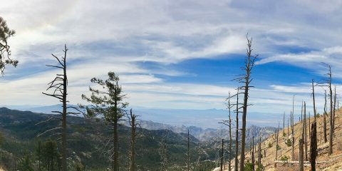 Photo of the Catalina Mountains