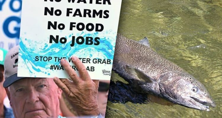 composite of farmers protesting water shortages and a California salmon