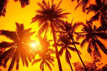 Photo of sun peeking through palm trees symbolizing warm weather