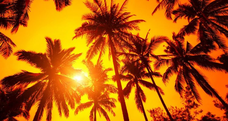 Photo of sun peeking through palm trees symbolizing warm weather