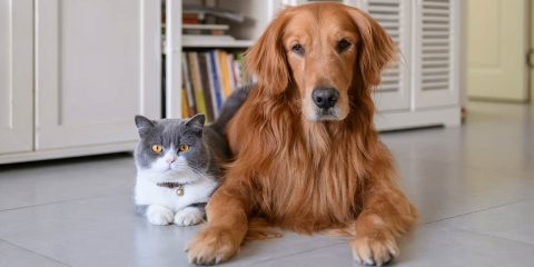 Photo of a cat next to a dog
