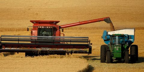 Photo of wheat being harvested