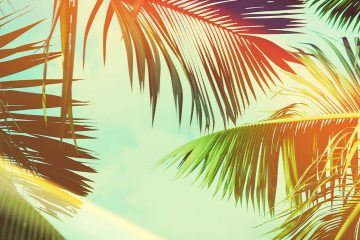 Image of coconut palm trees