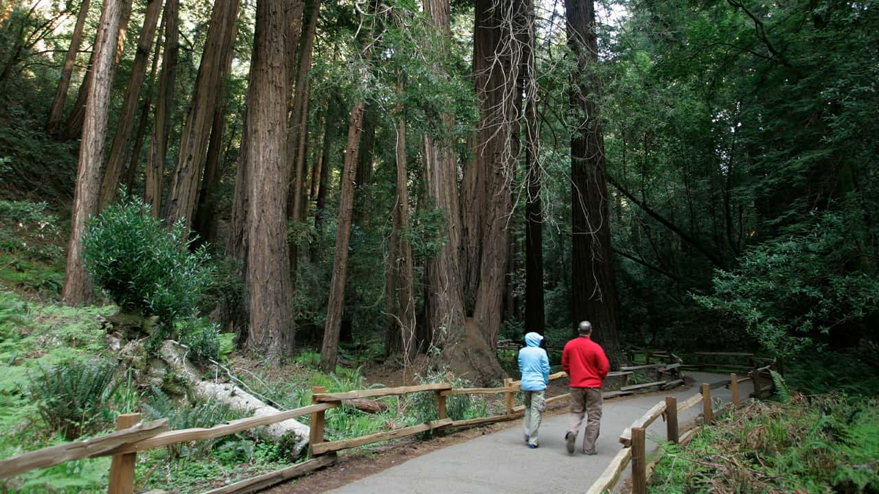 Photo of a couple walking s beneath giant redwoods at the Muir Woods National Monument in Marin County, California