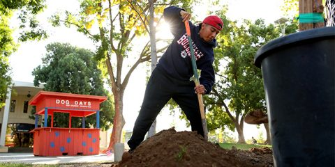Image of a Fresno State student doing landscape work on campus