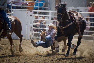 Action picture of a steer wrestler at the Clovis Rodeoe